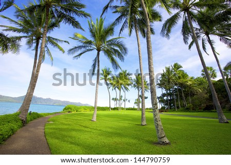 Tropical trees on island resort