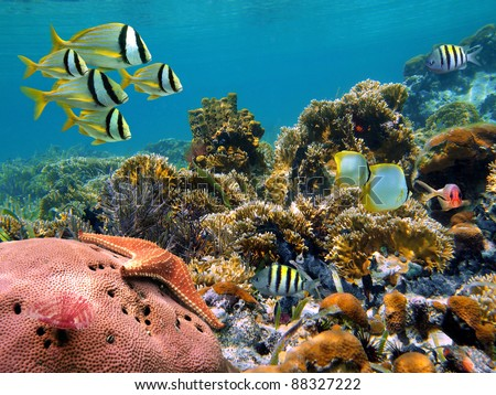 Tropical underwater landscape with colorful fish in a thriving coral reef of the Caribbean sea
