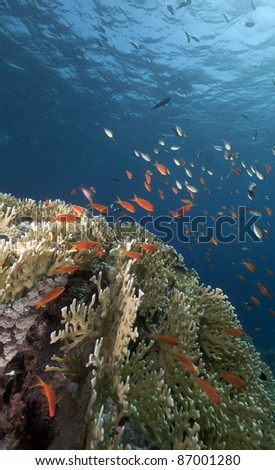 Tropical underwater life in the Red Sea.