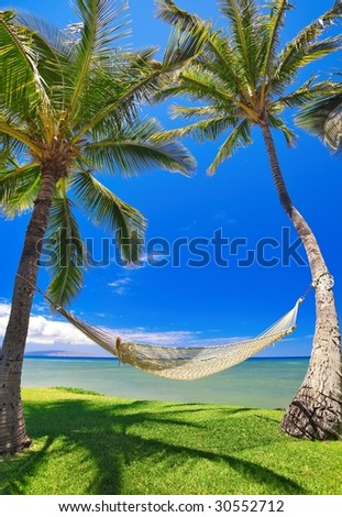 Tropical Vacation, Palm Trees and Hammock