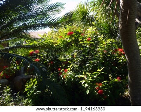 Tropical vegetation and flowers #1194163930