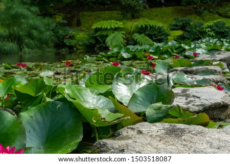 tropical vegetation in the middle of the Atlantic ocenao. Azores islands