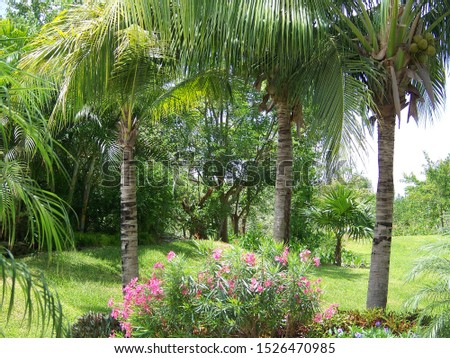 Tropical view with lush foliage #1526470985