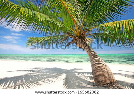 tropical  white sand beach with a palm and turquoise water #165682082
