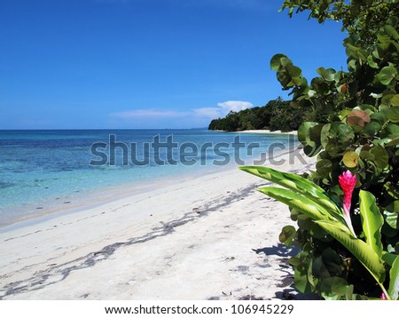 Tropical white sand beach with clear water of the Caribbean sea and a red ginger flower in foreground, Bocas del Toro, Panama