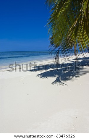 Tropical white sand beach with palmtree