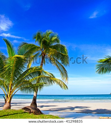 Tropical white sand virgin beach #41298835