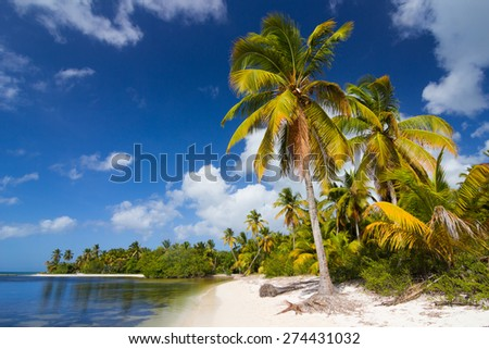 Tropical wild beach with white sand and palm trees in Punta Cana, Dominican Republic
