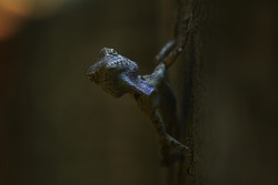 tropical wild lizard animal , crawling chameleon
