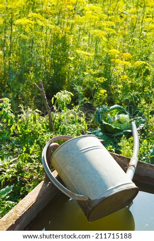 trough with water for garden watering and handshower in garden in summer day