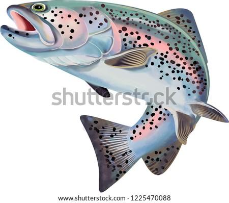 Trout Fish Illustration Stock photo ©
