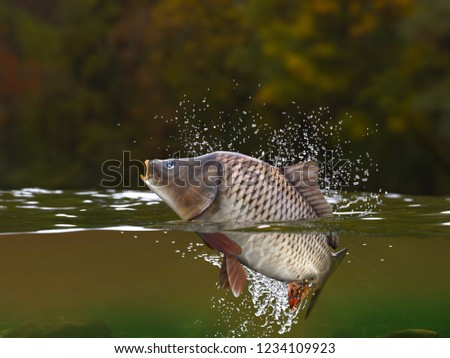 Trout fish jumping in river halfwater view 3d realitstic render