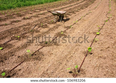 Truck in eco agricultural garden with drip irrigation