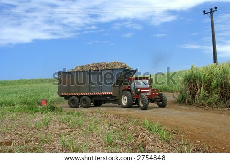 Truck loaded with sugar cane