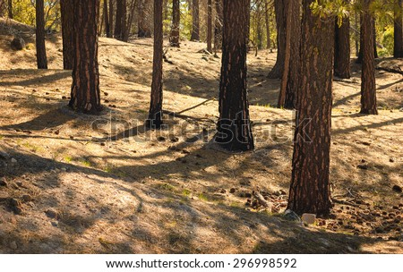 Trucks and Forest Texture at Lassen Volcanic National Park