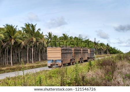 Trucks for the transport of sugar cane for the production of ethanol in Brazil
