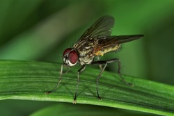 True flies are insects of the order Diptera possessing a single pair of wings on the mesothorax and a pair of halteres, derived from the hind wings, on the metathorax.