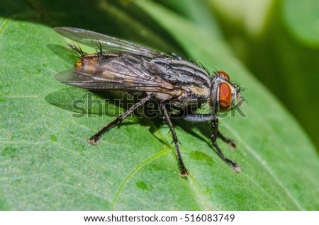 True fly