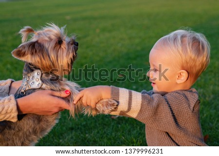 True friendship. Best friends forever. Happy childhood. Sweet childhood memories. Child play with yorkshire terrier dog. Toddler boy enjoy leisure with dog friend. Small baby toddler walk with dog.