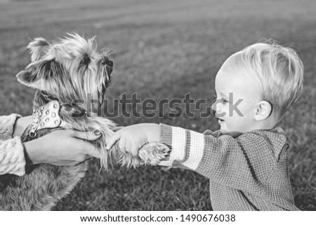 True friendship. Best friends forever. Happy childhood. Sweet childhood memories. Child play with yorkshire terrier dog. Toddler boy enjoy leisure with dog friend. Small baby toddler walk with dog. #1490676038