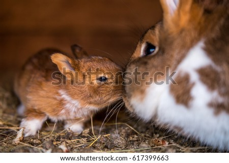 True love, Bunny, Rabbit #617399663