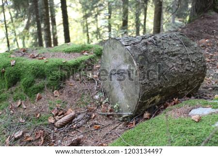 trunk in the vegetation #1203134497