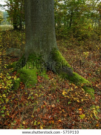 Trunk of an old oak in an autumn forest