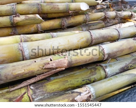 Trunk of sugarcane stacked together and ready to be material of sugar producing process.  #1551545447