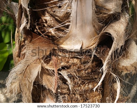 Trunk Of The Palm Tree - stock photo
