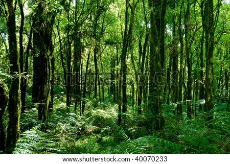 Trunks of trees with moss on brazilian atlantic rainforest.