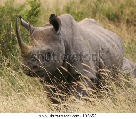 Tsavo blk rhino 1,04