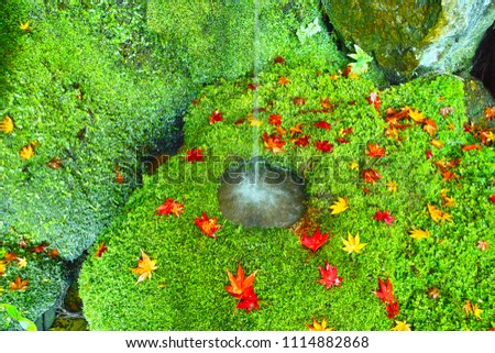 Tsukubai covered with moss in Sagano, Kyoto city. Momiji leaves are scattered around the Tsukubai in the autumn leaves season.