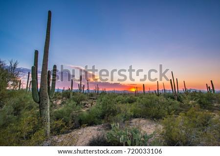 Shutterstock Tucson, Arizona