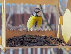 Tufted titmouse bird sitting on