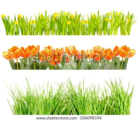 Tufts of Tulips, Narcissus and Green Grass Isolated on White