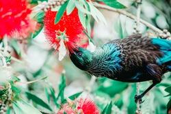 tui bird feed on christmas tree