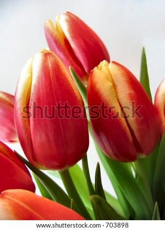 Tulip bunch red yellow flowers