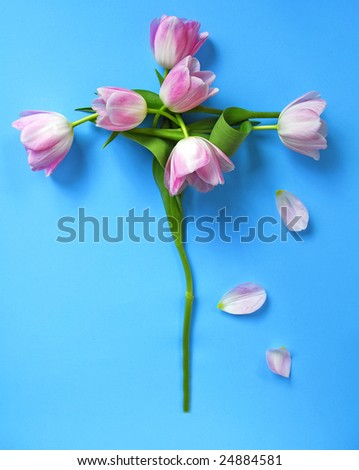 Tulip Cross made of flowers on a blue background