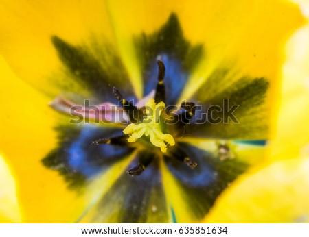 Tulip detail #635851634