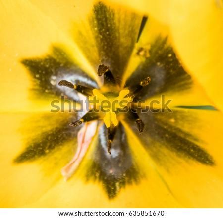 Tulip detail #635851670