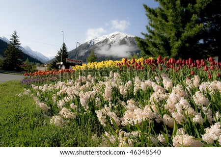 stock-photo-tulip-field-and-cityscape-during-spring-in-davos-switzerland-46348540.jpg