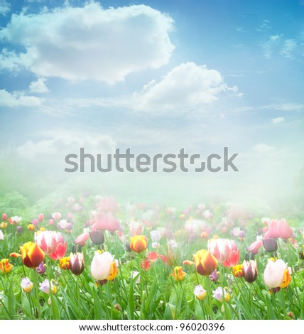 Tulip field. Easter spring background with tulips in a beautiful meadow and cloudscape