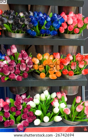 tulip for sale at the market in Amsterdam
