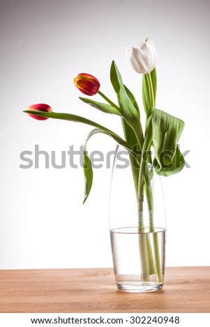 tulip in a vase red tulip in a vase on a table against a white background, white tulip vase with clean water and tulip glass vase, flamed tulip, three tulips, red and yellow tulip vase with tulips