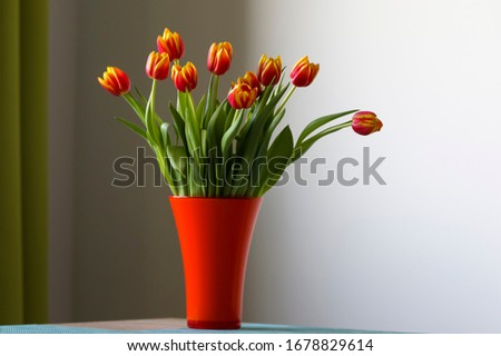 Tulip in a vase red tulip in a vase on a table, flamed tulip, red and yellow tulip vase with tulips