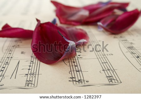 tulip petals on the music paper (small DOF)