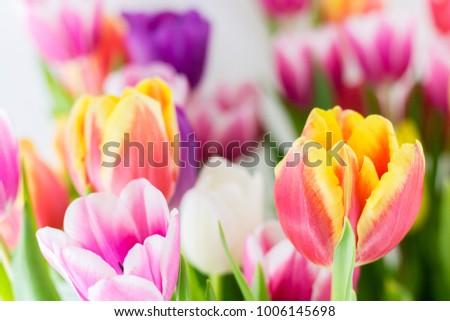Free Photos Fresh Spring Flower Borders Vector Avopix