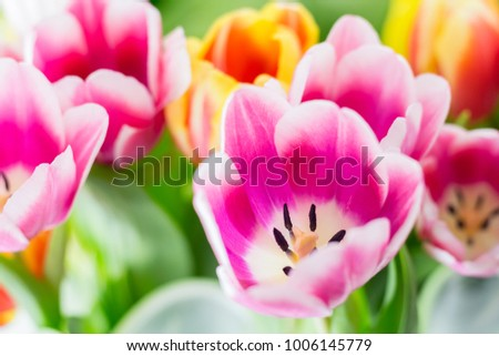 Tulip. Spring flowers background bunch of colorful flowers #1006145779