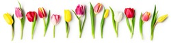 Tulip spring flowers with leaves collection isolated on white background. Floral banner composition with beautiful colorful tulips. Easter flowers concept. Flat lay, pattern