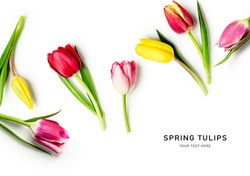 Tulip spring flowers with leaves creative layout isolated on white background. Floral composition with beautiful colorful tulips. Easter flowers concept. Flat lay, design element